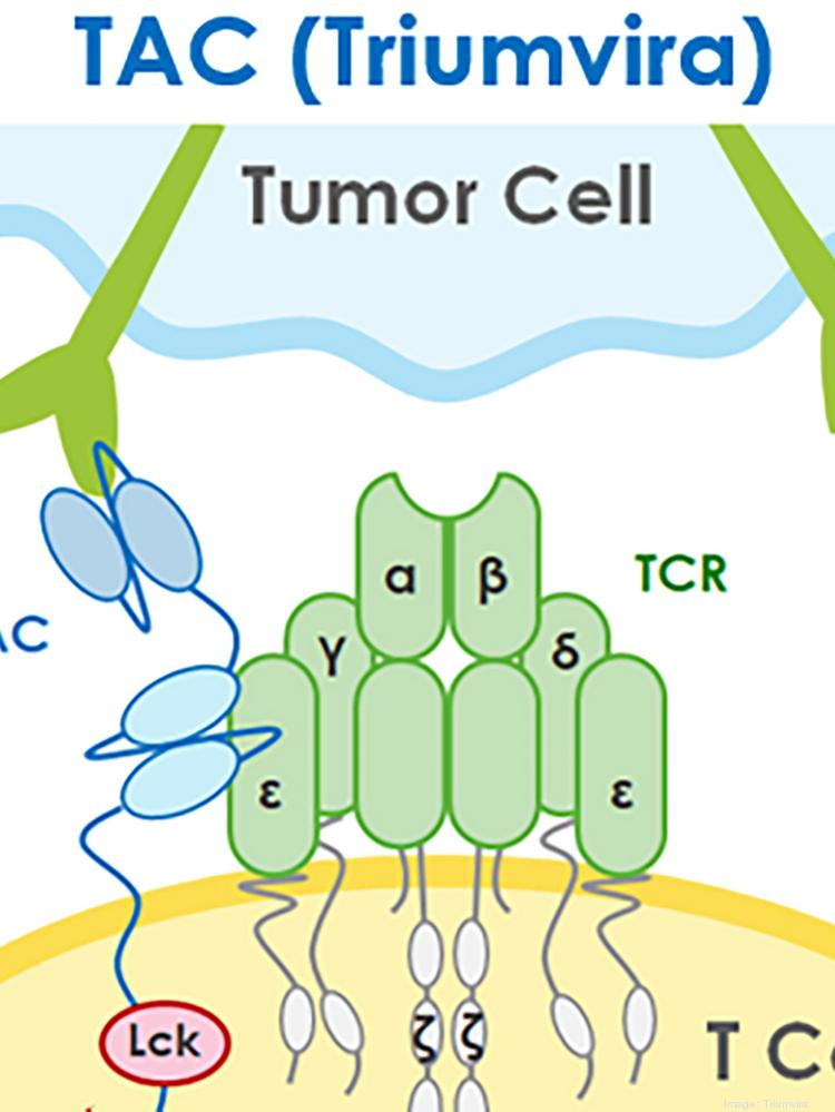 Triumvira Immunologics raises $55M in Series A funding round for new form of cancer cell therapy