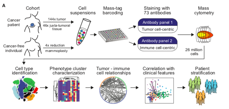 Machine Learning Helps Classify Breast Cancer Cell Types